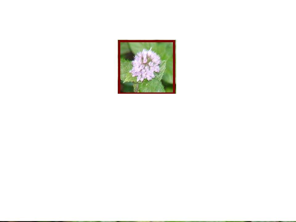 -Maroto, J.V. (1995). Horticultura Herbacea Especial.