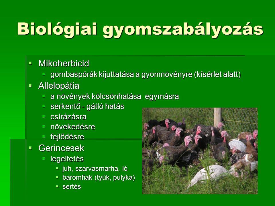 Biológiai gyomszabályozás  Mikoherbicid  gombaspórák kijuttatása a gyomnövényre (kísérlet alatt)  Allelopátia  a növények kölcsönhatása egymásra  serkentő - gátló hatás  csírázásra  növekedésre  fejlődésre  Gerincesek  legeltetés  juh, szarvasmarha, ló  baromfiak (tyúk, pulyka)  sertés