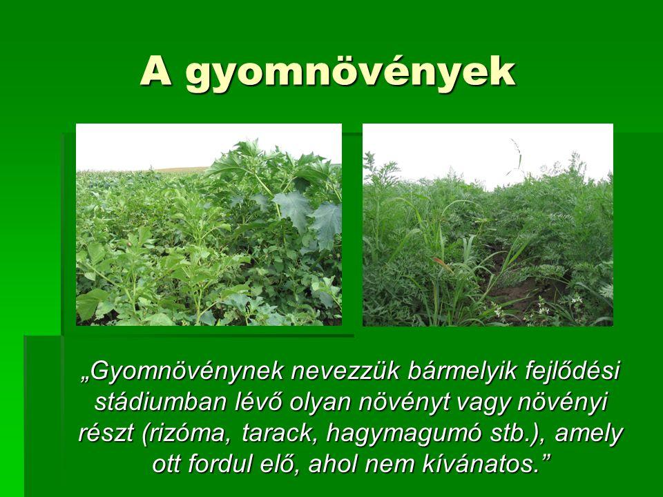 """A gyomnövények """"Gyomnövénynek nevezzük bármelyik fejlődési stádiumban lévő olyan növényt vagy növényi részt (rizóma, tarack, hagymagumó stb.), amely ott fordul elő, ahol nem kívánatos."""