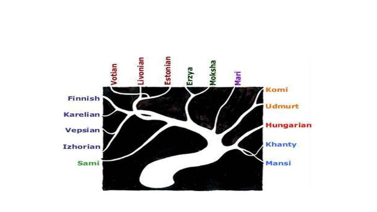 Genealógiai (rokonság szerinti) osztályozás Source: Wikipedia