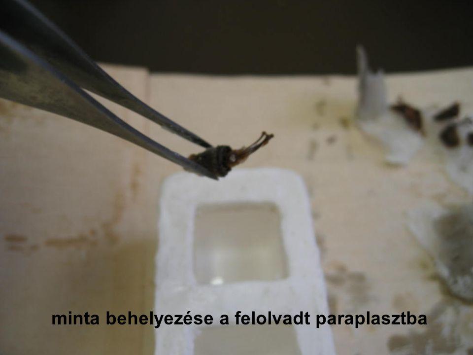 minta behelyezése a felolvadt paraplasztba