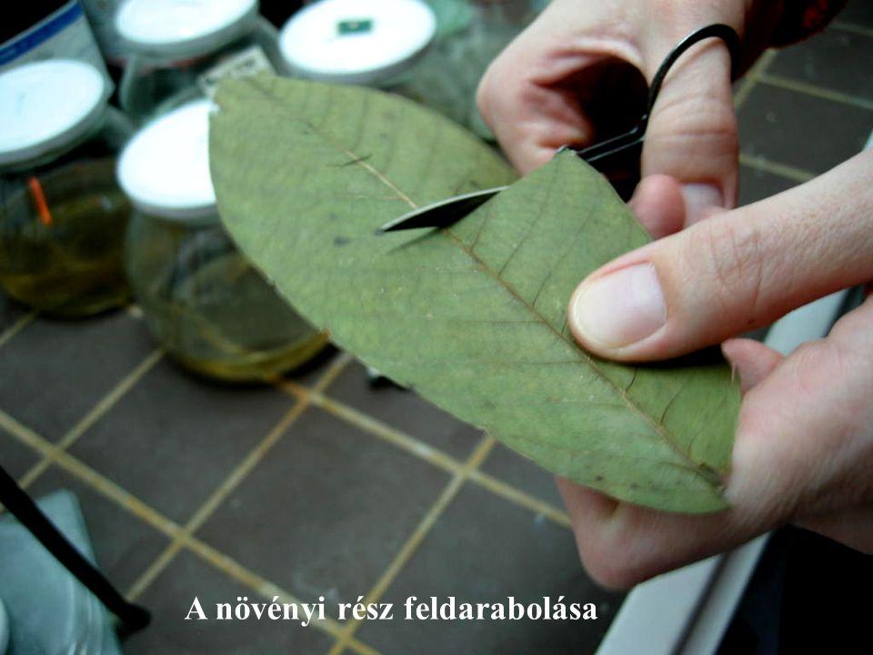 A növényi rész feldarabolása