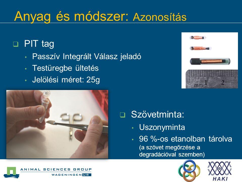 Anyag és módszer: Azonosítás  PIT tag Passzív Integrált Válasz jeladó Testüregbe ültetés Jelölési méret: 25g  Szövetminta: Uszonyminta 96 %-os etanolban tárolva (a szövet megőrzése a degradációval szemben)