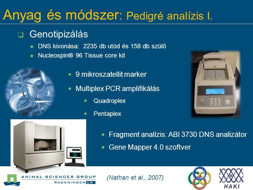 Anyag és módszer : Pedigré analízis I.  Genotipizálás DNS kivonása: 2235 db utód és 158 db szülő Nucleospin® 96 Tissue core kit Fragment analízis: AB