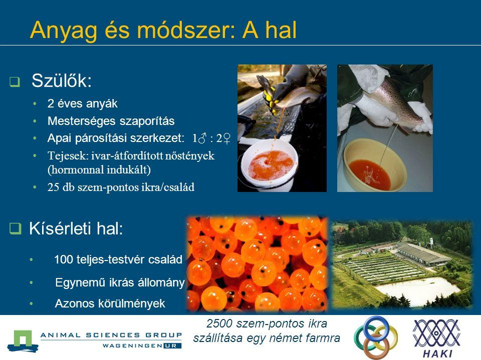 Anyag és módszer: A hal  Szülők: 2 éves anyák Mesterséges szaporítás Apai párosítási szerkezet: 1♂ : 2♀ Tejesek: ivar-átfordított nőstények (hormonna