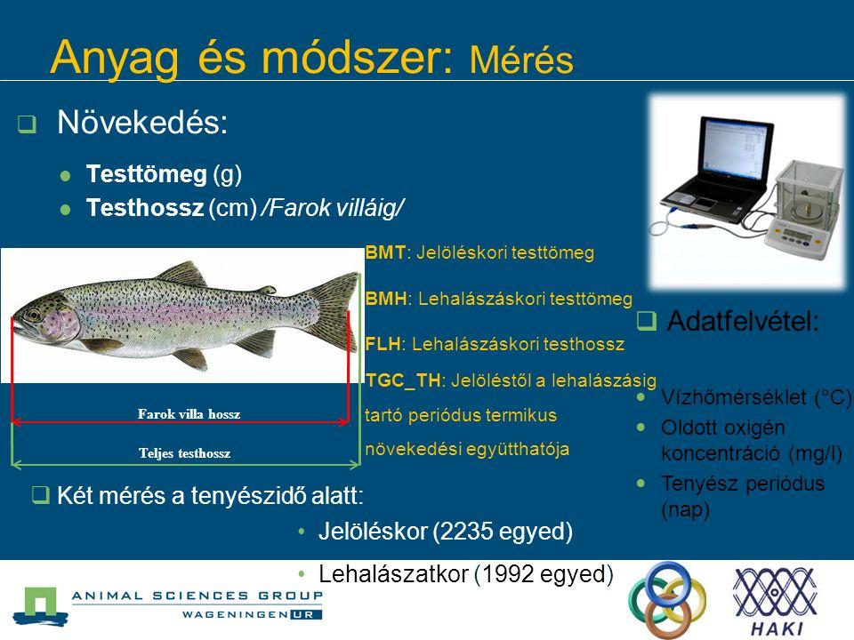 Anyag és módszer: Mérés  Növekedés: Testtömeg (g) Testhossz (cm) /Farok villáig/  Adatfelvétel: Vízhőmérséklet (°C) Oldott oxigén koncentráció (mg/l) Tenyész periódus (nap) Farok villa hossz Teljes testhossz  Két mérés a tenyészidő alatt: Jelöléskor (2235 egyed) Lehalászatkor (1992 egyed) BMT: Jelöléskori testtömeg BMH: Lehalászáskori testtömeg FLH: Lehalászáskori testhossz TGC_TH: Jelöléstől a lehalászásig tartó periódus termikus növekedési együtthatója