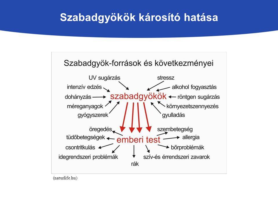 Szabadgyökök károsító hatása (naturlife.hu)