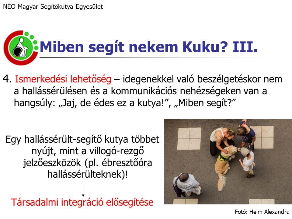 """Személyes élmény """"Bocsi, Kuku, bocsi… (terápiás képzés, 2013) NEO Magyar Segítőkutya Egyesület – Jaj, ráléptél a farkára."""