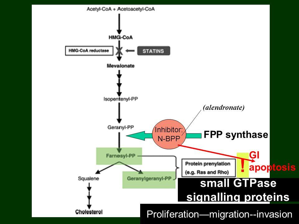 FPP synthase Inhibitor: N-BPP .