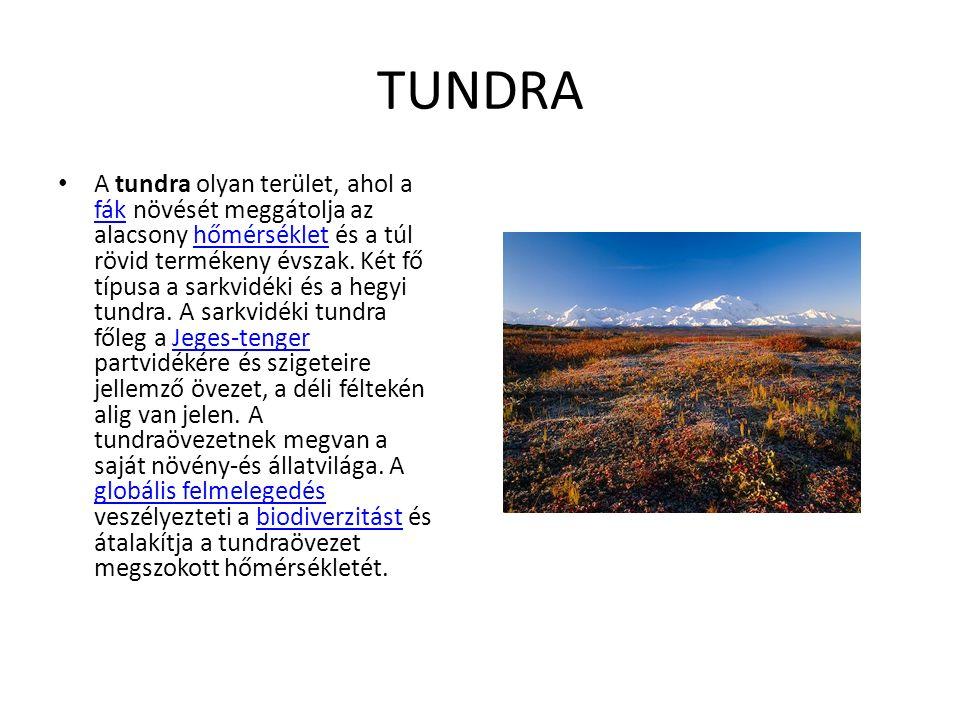 TUNDRA A tundra olyan terület, ahol a fák növését meggátolja az alacsony hőmérséklet és a túl rövid termékeny évszak.
