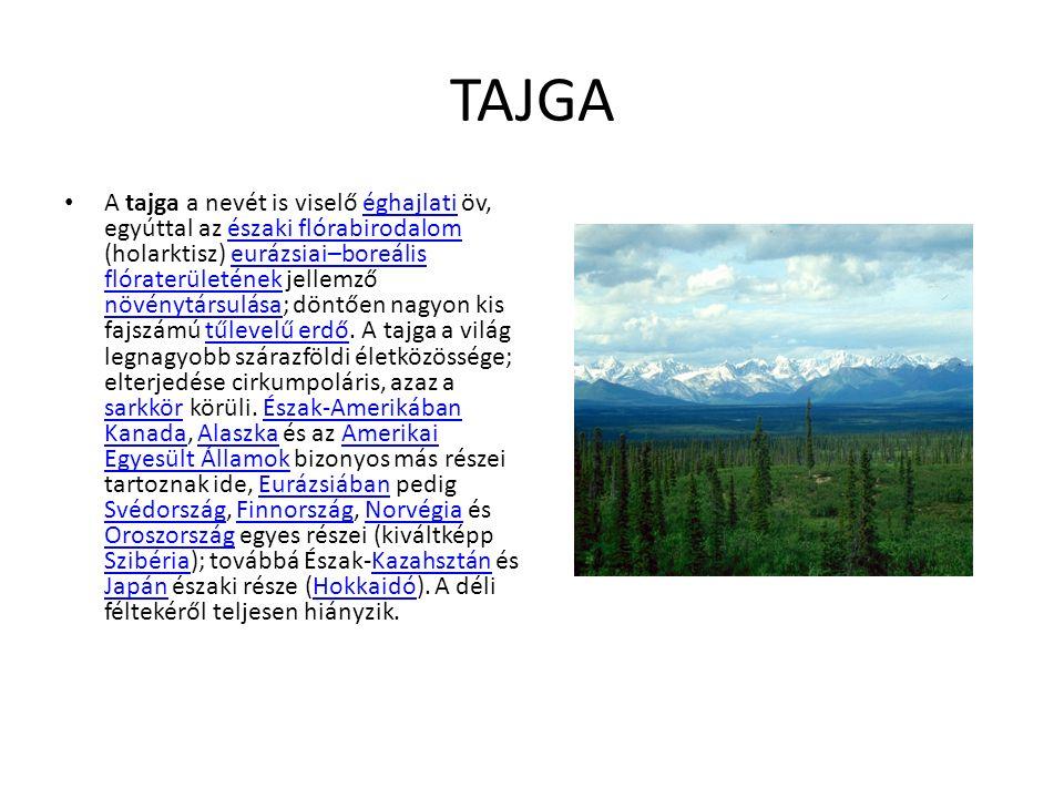 TAJGA A tajga a nevét is viselő éghajlati öv, egyúttal az északi flórabirodalom (holarktisz) eurázsiai–boreális flóraterületének jellemző növénytársulása; döntően nagyon kis fajszámú tűlevelű erdő.