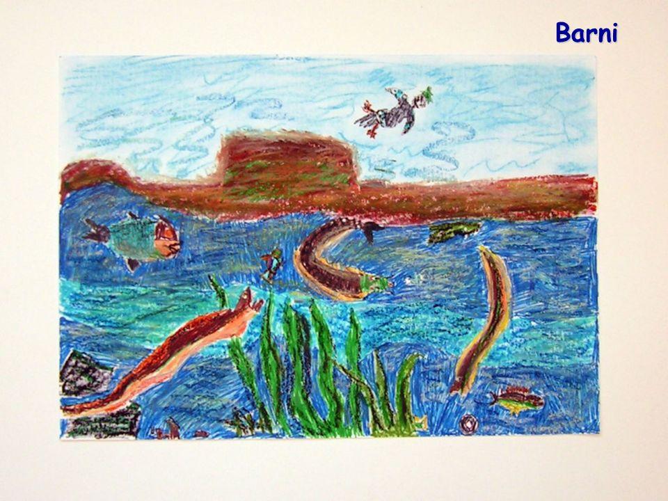 A víz és szervezetünk Az emberi test legnagyobb részt vízből áll, az életkor előrehaladtával a víz aránya csökken.