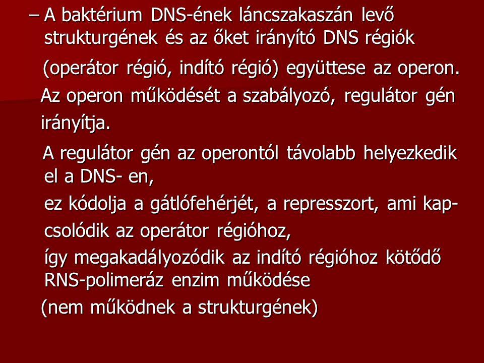 –A baktérium DNS-ének láncszakaszán levő strukturgének és az őket irányító DNS régiók (operátor régió, indító régió) együttese az operon. (operátor ré