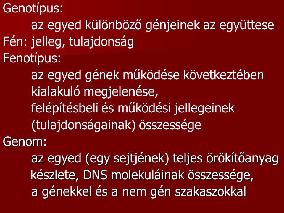 Genotípus: az egyed különböző génjeinek az együttese Fén: jelleg, tulajdonság Fenotípus: az egyed gének működése következtében kialakuló megjelenése,