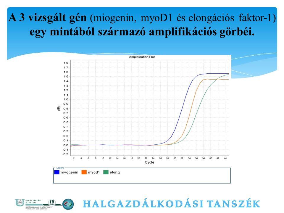 A 3 vizsgált gén (miogenin, myoD1 és elongációs faktor-1) egy mintából származó amplifikációs görbéi.