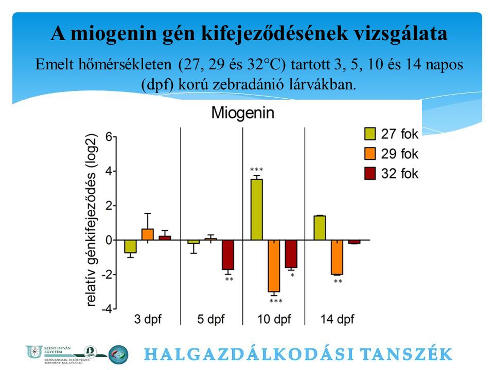 A miogenin gén kifejeződésének vizsgálata Emelt hőmérsékleten (27, 29 és 32°C) tartott 3, 5, 10 és 14 napos (dpf) korú zebradánió lárvákban.