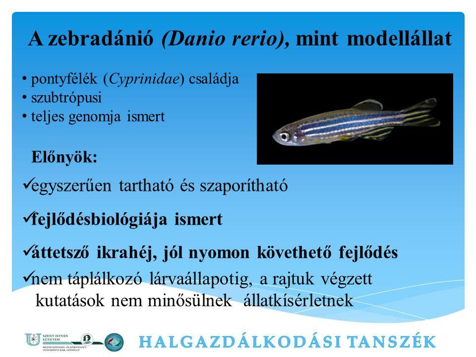 A zebradánió (Danio rerio), mint modellállat pontyfélék (Cyprinidae) családja szubtrópusi teljes genomja ismert Előnyök: egyszerűen tartható és szapor