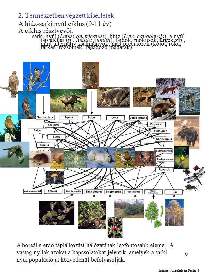 9 2. Természetben végzett kísérletek A hiúz-sarki nyúl ciklus (9-11 év) A ciklus résztvevői: sarki nyúl (Lepus americanus), hiúz (Lynx canadensis), a