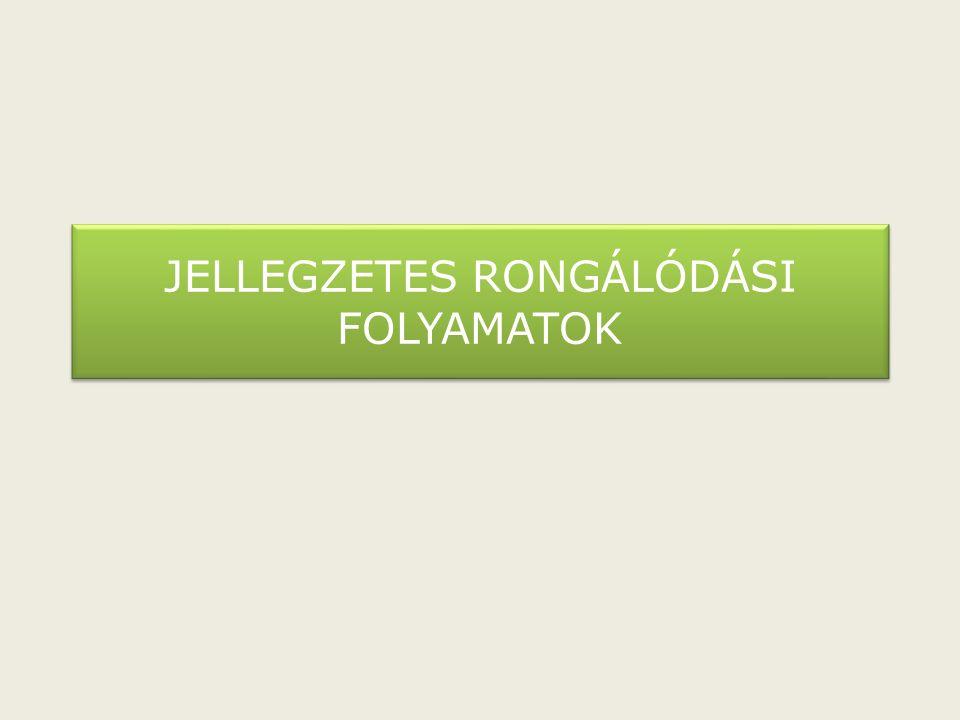 JELLEGZETES RONGÁLÓDÁSI FOLYAMATOK