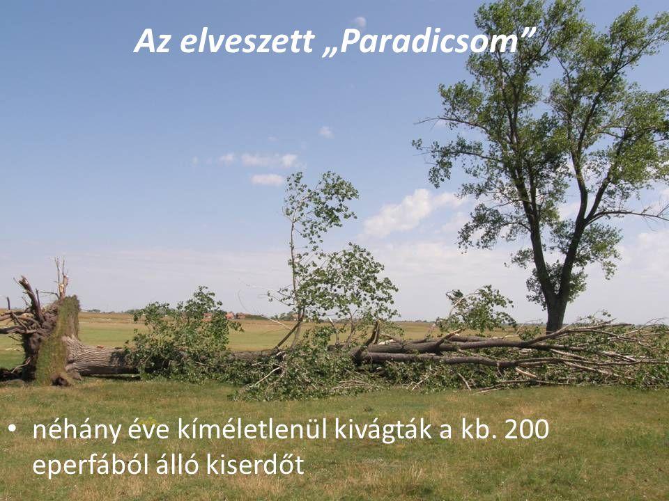 """Az elveszett """"Paradicsom néhány éve kíméletlenül kivágták a kb. 200 eperfából álló kiserdőt"""