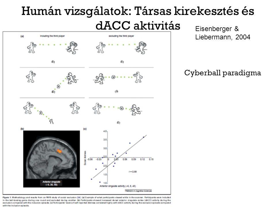 Humán vizsgálatok: Társas kirekesztés és dACC aktivitás Eisenberger & Liebermann, 2004 Cyberball paradigma