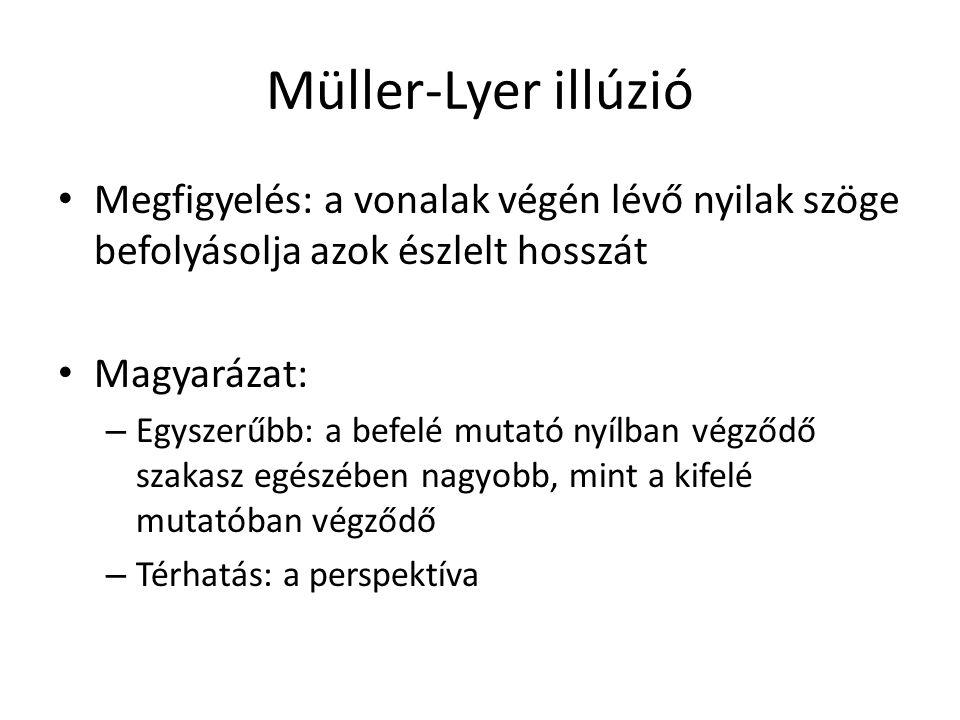 Müller-Lyer illúzió Megfigyelés: a vonalak végén lévő nyilak szöge befolyásolja azok észlelt hosszát Magyarázat: – Egyszerűbb: a befelé mutató nyílban végződő szakasz egészében nagyobb, mint a kifelé mutatóban végződő – Térhatás: a perspektíva