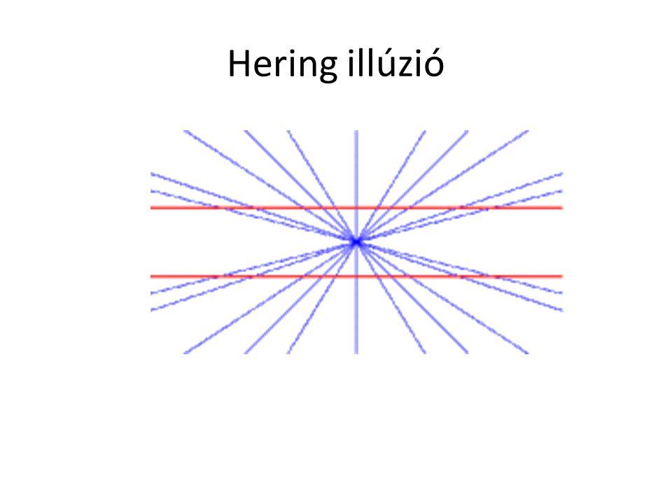 Hering illúzió
