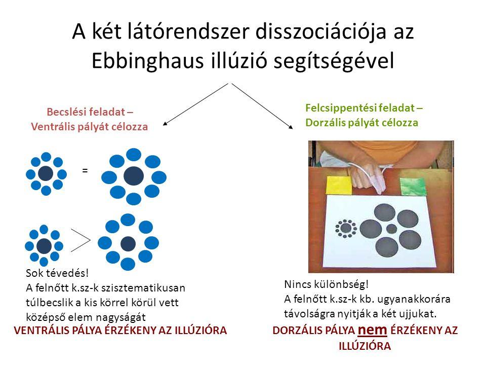 A két látórendszer disszociációja az Ebbinghaus illúzió segítségével Felcsippentési feladat – Dorzális pályát célozza Becslési feladat – Ventrális pályát célozza Sok tévedés.