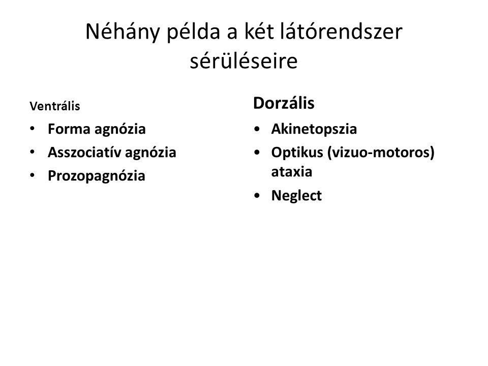 Néhány példa a két látórendszer sérüléseire Ventrális Forma agnózia Asszociatív agnózia Prozopagnózia Dorzális Akinetopszia Optikus (vizuo-motoros) ataxia Neglect