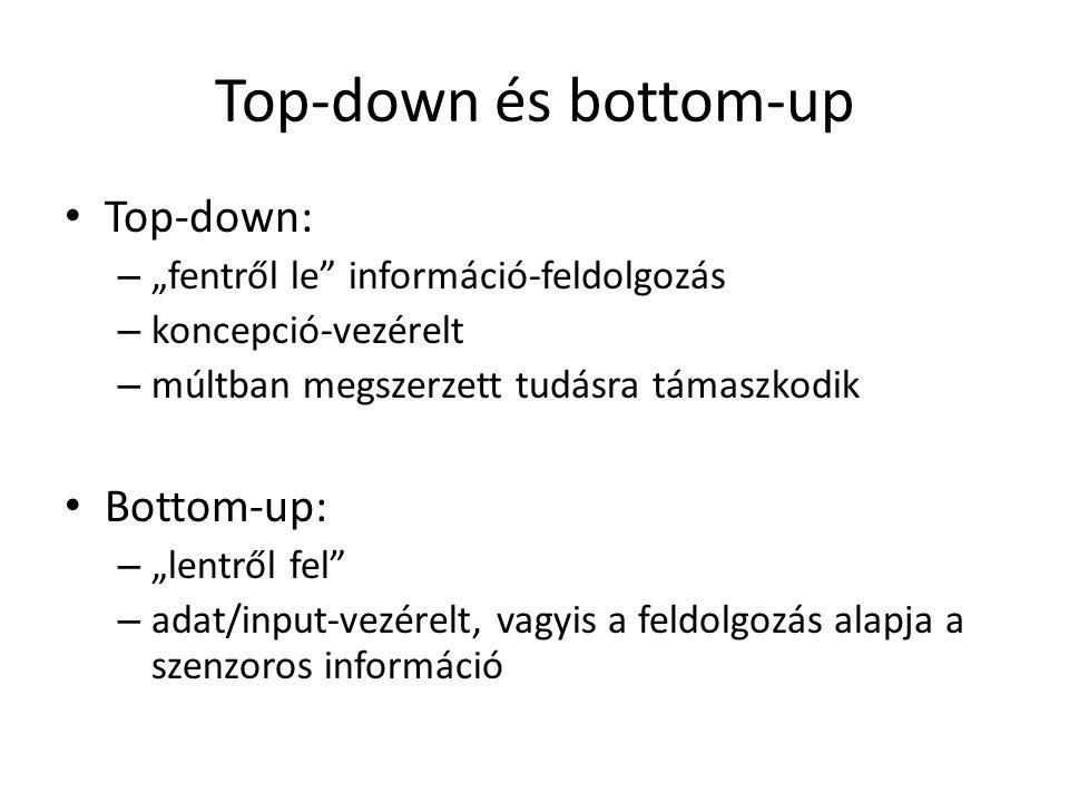 """Top-down és bottom-up Top-down: – """"fentről le információ-feldolgozás – koncepció-vezérelt – múltban megszerzett tudásra támaszkodik Bottom-up: – """"lentről fel – adat/input-vezérelt, vagyis a feldolgozás alapja a szenzoros információ"""