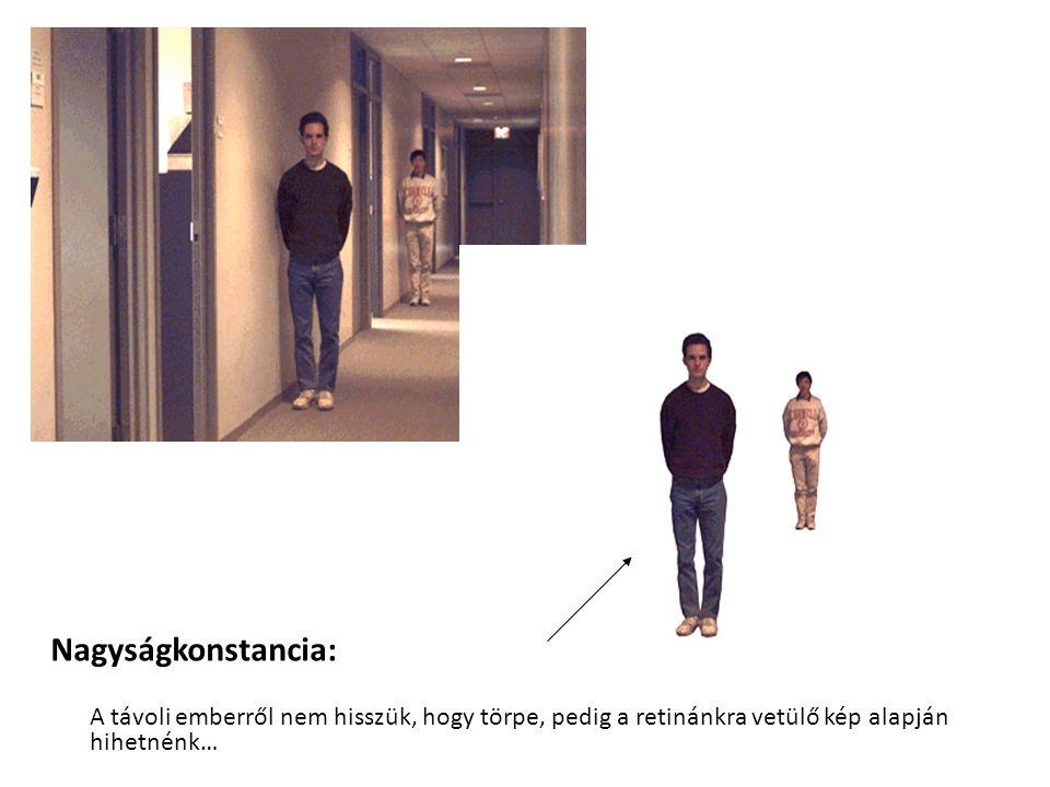 Nagyságkonstancia: A távoli emberről nem hisszük, hogy törpe, pedig a retinánkra vetülő kép alapján hihetnénk…