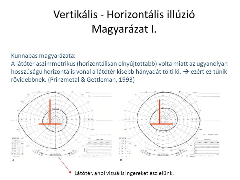 Nagyságkonstancia A tárgyak méretét állandónak észleljük akkor is, ha azok retinán leképződő képének nagysága megváltozik (vagyis ha közelednek/távolodnak).