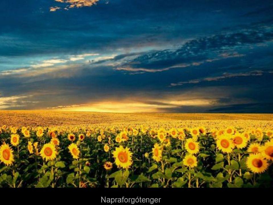 Hajnal Toszkánában - Olaszország