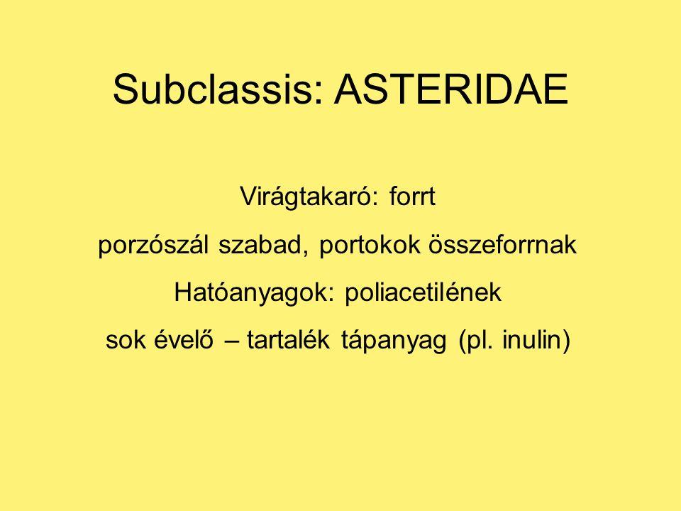 Subclassis: ASTERIDAE Virágtakaró: forrt porzószál szabad, portokok összeforrnak Hatóanyagok: poliacetilének sok évelő – tartalék tápanyag (pl.