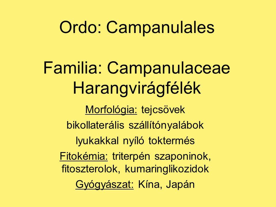Ordo: Campanulales Familia: Campanulaceae Harangvirágfélék Morfológia: tejcsövek bikollaterális szállítónyalábok lyukakkal nyíló toktermés Fitokémia: triterpén szaponinok, fitoszterolok, kumaringlikozidok Gyógyászat: Kína, Japán