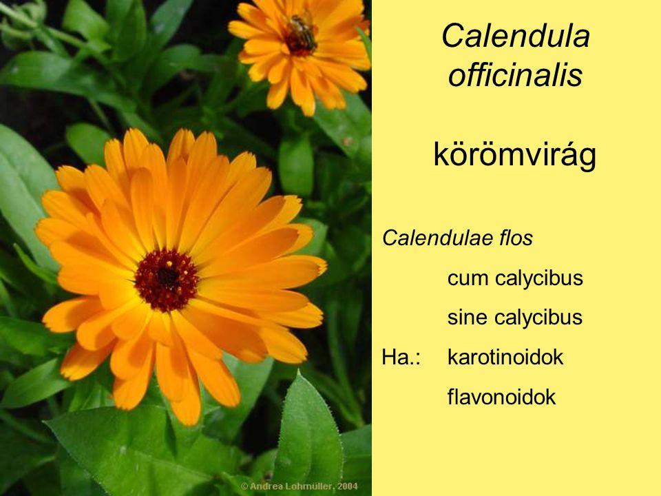Calendula officinalis körömvirág Calendulae flos cum calycibus sine calycibus Ha.:karotinoidok flavonoidok