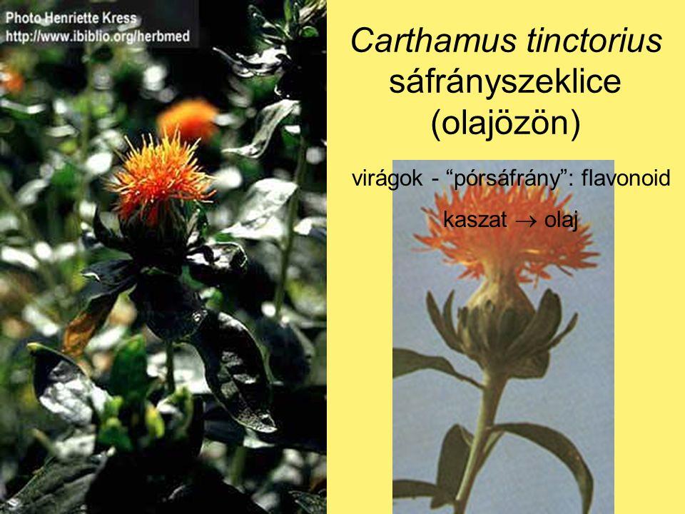 Carthamus tinctorius sáfrányszeklice (olajözön) virágok - pórsáfrány : flavonoid kaszat  olaj
