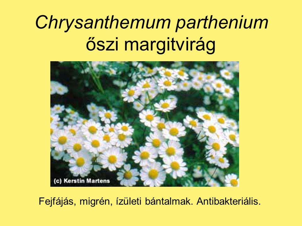 Chrysanthemum parthenium őszi margitvirág Fejfájás, migrén, ízületi bántalmak. Antibakteriális.