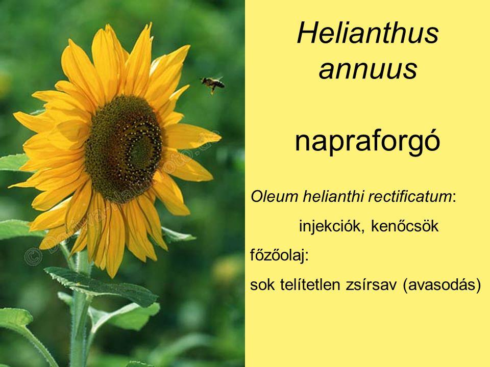 Helianthus annuus napraforgó Oleum helianthi rectificatum: injekciók, kenőcsök főzőolaj: sok telítetlen zsírsav (avasodás)