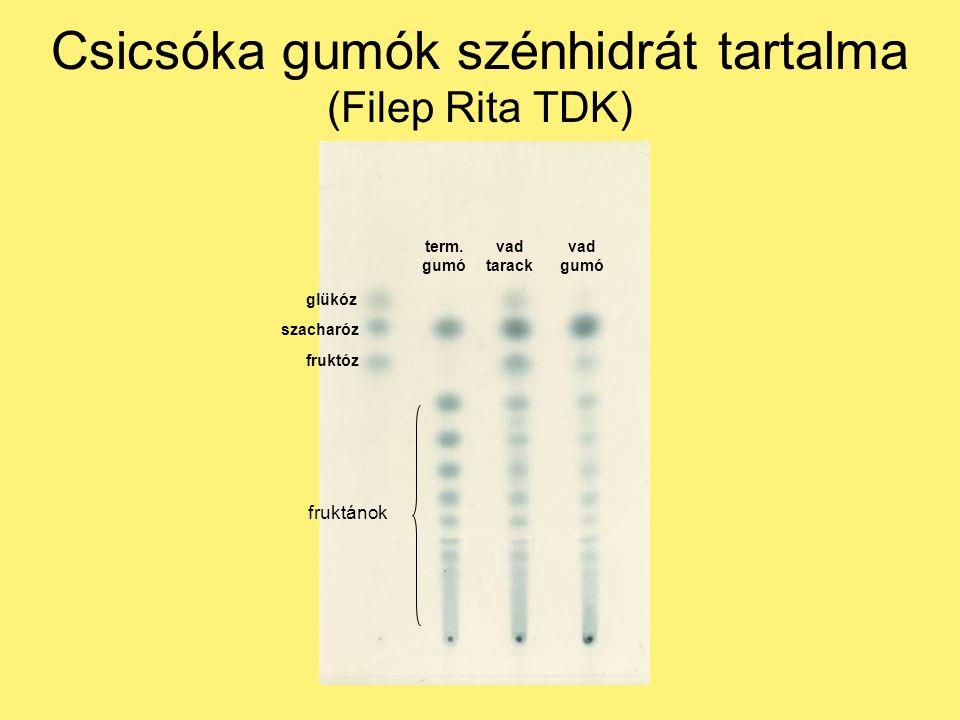 Csicsóka gumók szénhidrát tartalma (Filep Rita TDK) term.