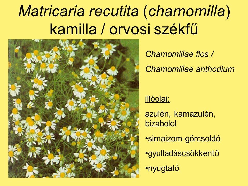 Chamomillae flos / Chamomillae anthodium illóolaj: azulén, kamazulén, bizabolol simaizom-görcsoldó gyulladáscsökkentő nyugtató
