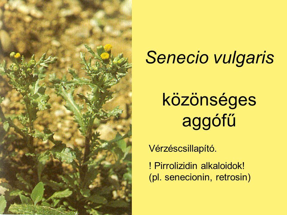 Senecio vulgaris közönséges aggófű Vérzéscsillapító.