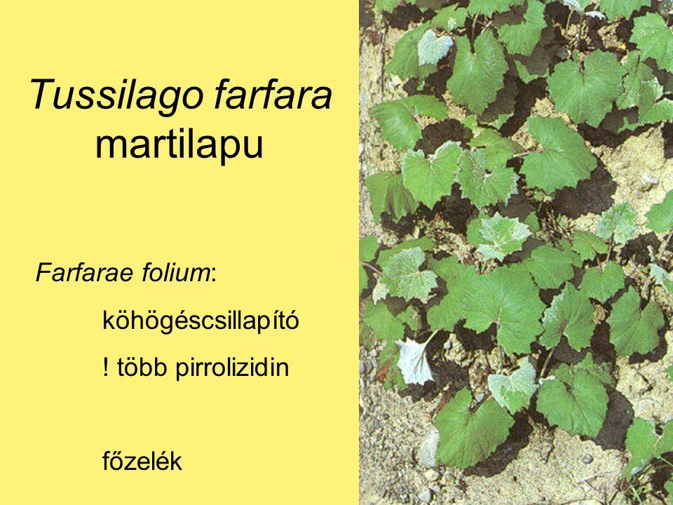 Farfarae folium: köhögéscsillapító ! több pirrolizidin főzelék