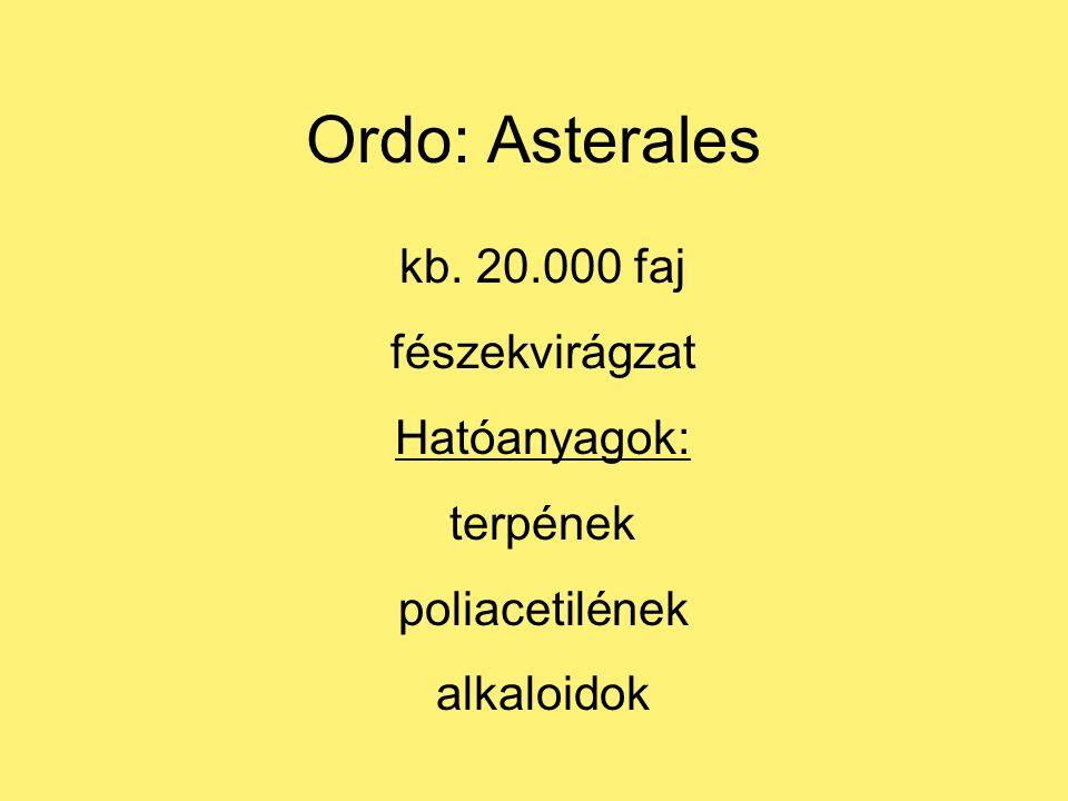 Ordo: Asterales kb. 20.000 faj fészekvirágzat Hatóanyagok: terpének poliacetilének alkaloidok