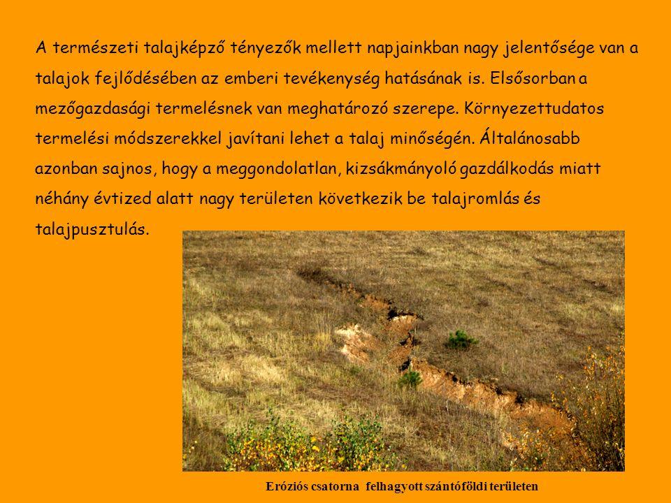 A természeti talajképző tényezők mellett napjainkban nagy jelentősége van a talajok fejlődésében az emberi tevékenység hatásának is.