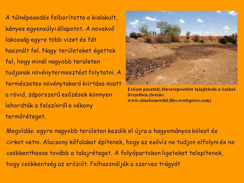 Erősen pusztult, felcserepesedett talajfelszín a Száhel- övezetben (forrás: www.churlsonewild.files.worlspress.com) A túlnépesedés felborította a kialakult, kényes egyensúlyi állapotot.