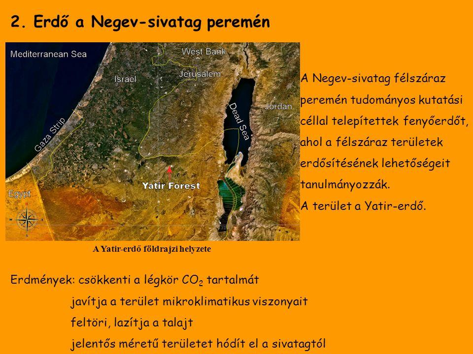2. Erdő a Negev-sivatag peremén A Yatir-erdő földrajzi helyzete A Negev-sivatag félszáraz peremén tudományos kutatási céllal telepítettek fenyőerdőt,