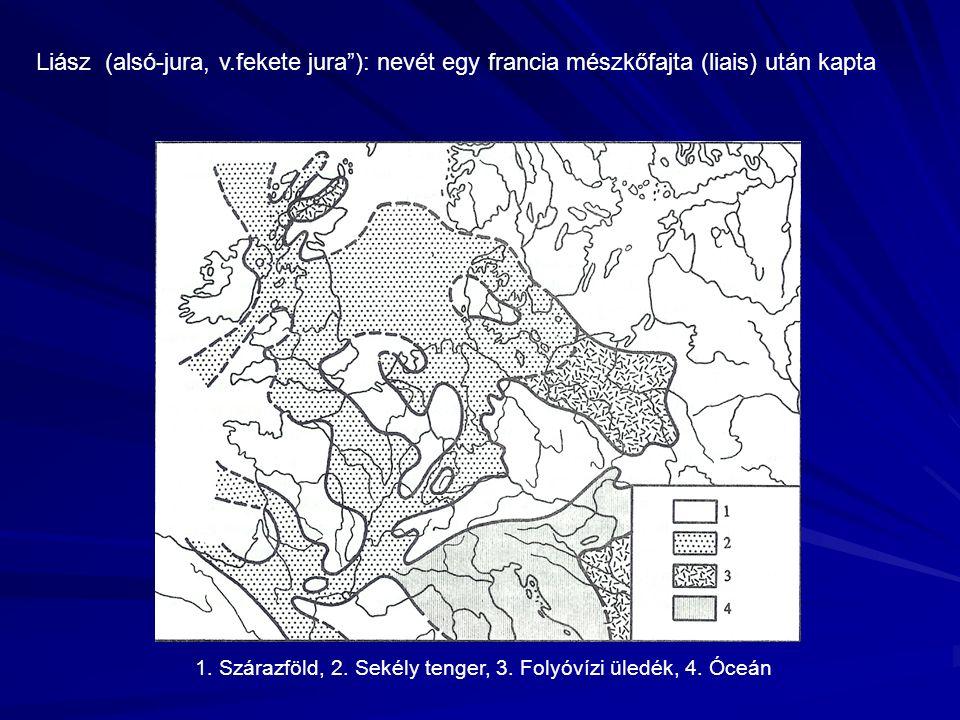 Liász (alsó-jura, v.fekete jura ): nevét egy francia mészkőfajta (liais) után kapta 1.