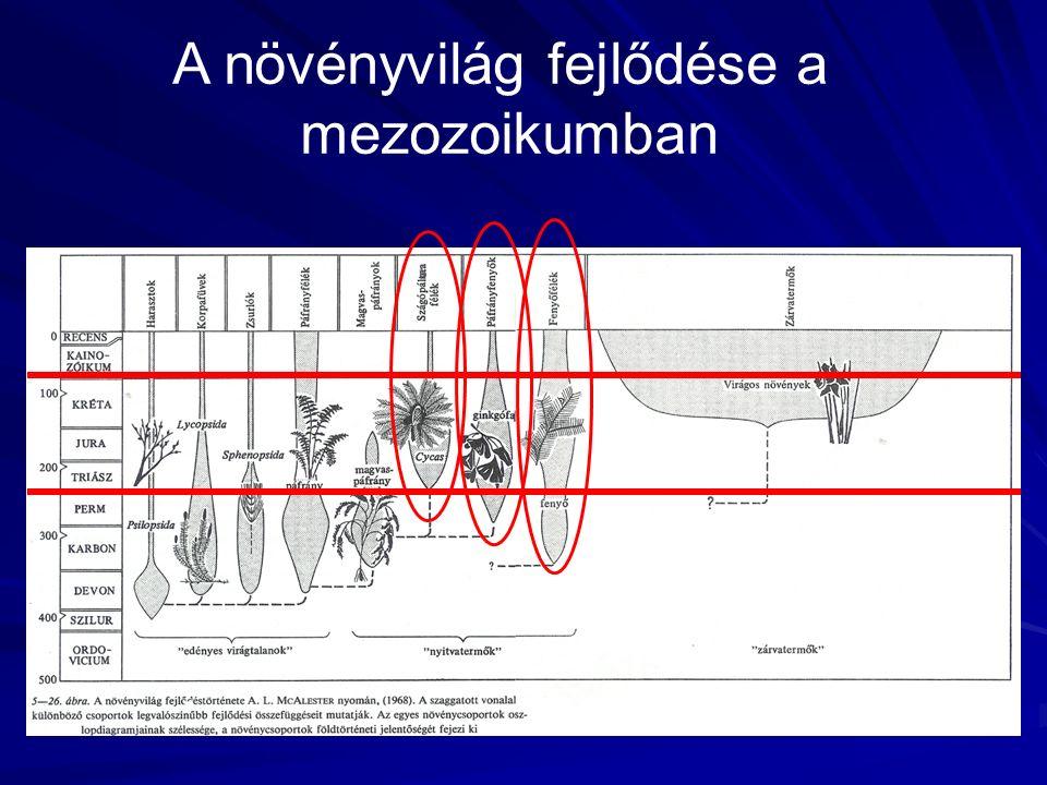 A növényvilág fejlődése a mezozoikumban