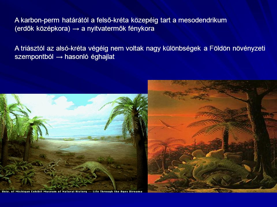 A karbon-perm határától a felső-kréta közepéig tart a mesodendrikum (erdők középkora) → a nyitvatermők fénykora A triásztól az alsó-kréta végéig nem voltak nagy különbségek a Földön növényzeti szempontból → hasonló éghajlat